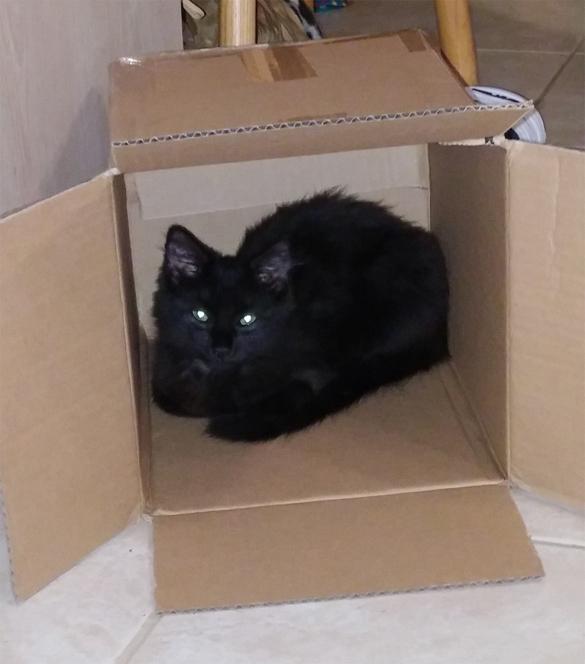 Mia box babby